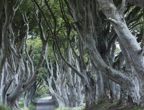 Fotoreis Noord-Ierland